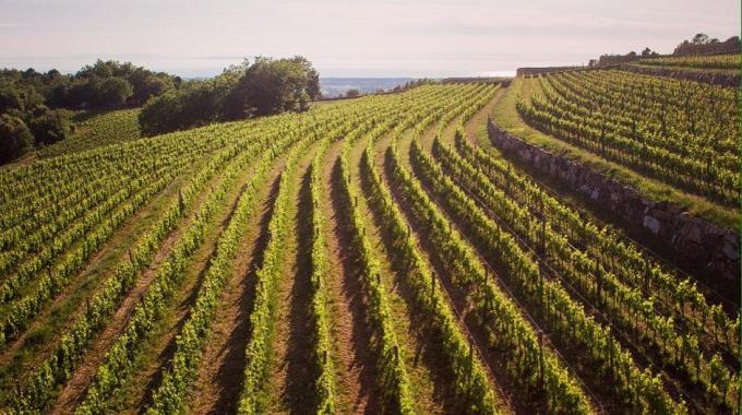 Bere Bene : un vin italien de qualité sélectionné parmi les meilleurs vignobles