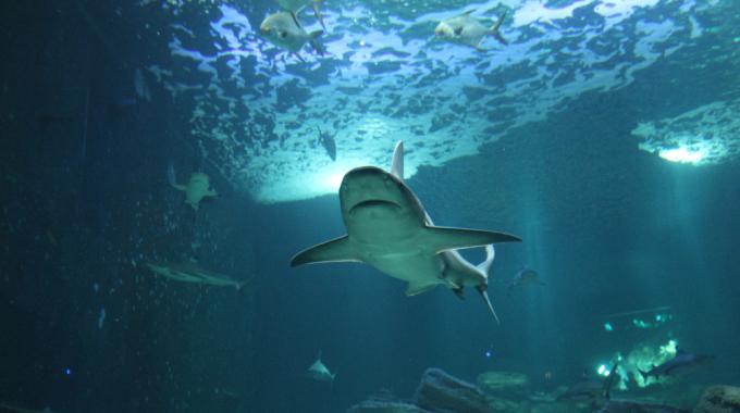 L'Aquarium de Paris : plongée au coeur des océans