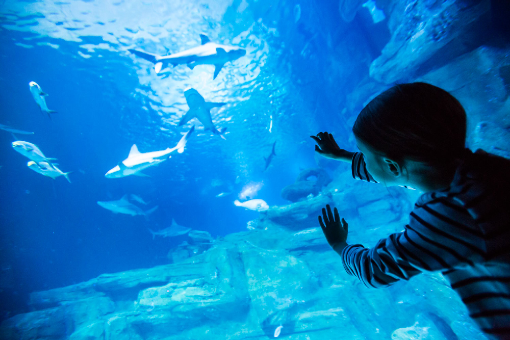 © Aquarium de Paris
