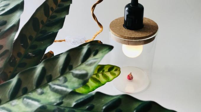 Le Cercle de la Lumière : une lampe bocal design et insolite
